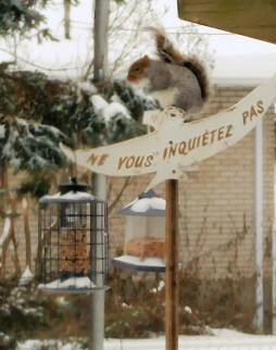 ecureuil ne vous inquietez pas